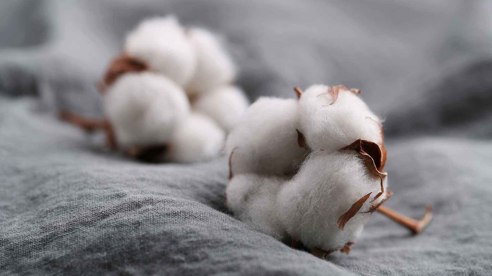 Prečo zvoliť oblečenie zorganickej bavlny?